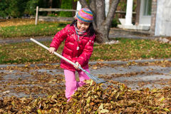 Girl Raking Leaves. Young girl raking fall leaves on a sunny autumn day royalty free stock photo