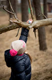 Girl reaching for Easter egg on high tree branch Stock Photo
