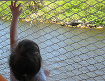 Girl reaching on fence. On a ferry boat royalty free stock photo