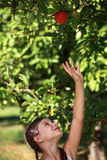 Girl reaching up for an apple. Young girl reaching up for an apple under an apple tree Stock Photography