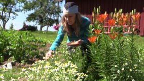 Girl reap organic domestic camomile near lily bush, focus change stock video