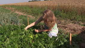 Girl reap snap beans in vegetable garden outdoor on sunny day. stock footage