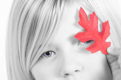 Girl with red Autumn leaf. Black and white portrait of young girl with red autumn leaf covering eye, studio background royalty free stock photos