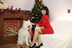 The girl with the big dog at the festive tree. Girl in red brunette dress and white dog meet Christmas at the Christmas tree Stock Images