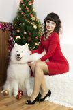 The girl with the big dog at the festive tree. Girl in red brunette dress and white dog meet Christmas at the Christmas tree Stock Photography
