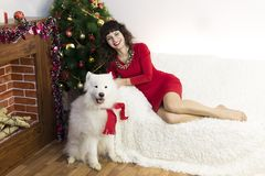 The girl with the big dog at the festive tree. Girl in red brunette dress and white dog meet Christmas at the Christmas tree Royalty Free Stock Image