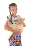 The girl with a red cat. Of breed Scottish-straight are photographed on the white background Stock Image