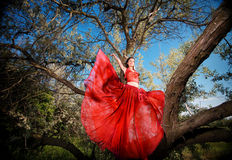 Girl in red dress on a tree branch Stock Photos