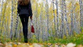 Girl with red handbag appears in frame walks to gold birches. Backside view blond long haired girl in black appears in frame with red handbag walking among gold stock video