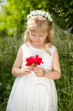 Girl with red rose. Adorable blond little girl with flower headband looking at red rose held in hands Stock Photo