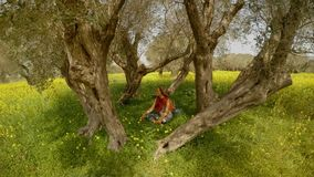 A girl in a red scarf and black glasses is sitting in the middle of an olive garden on green grass in yellow flowers. Ancient Olive Trees, a collection of stock footage