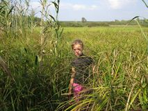 A girl in the reeds Stock Image