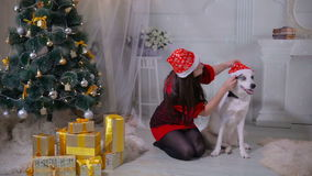 Girl regaling and playing with husky dog near christmas tree. stock video footage