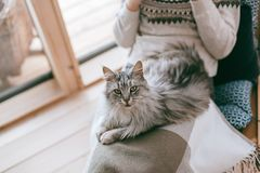 Girl relaxing with cat at home royalty free stock image