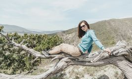 Girl resting on juniper tree. Beautiful girl in sunglasses resting on juniper tree outdoor, looking at camera stock photos