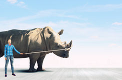 Girl with rhino Royalty Free Stock Images