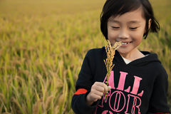 A girl in the rice field Royalty Free Stock Photo