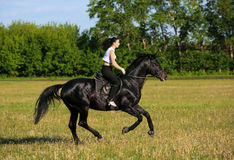 Girl ride gallop horseback on a field. Equestrian girl rushes gallop on a horse on a field Royalty Free Stock Photos