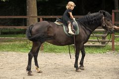 Girl ride on horse on summer day. Child sit in rider saddle on animal back. Equine therapy, recreation concept. Friend, companion, friendship. Sport, activity stock image
