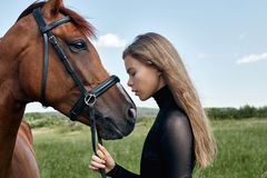 Girl rider stands next to the horse in the field. Fashion portrait of a woman and the mares are horses in the village in the grass. Blonde woman holding a royalty free stock photos