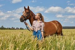 Girl rider stands next to the horse in the field. Fashion portrait of a woman and the mares are horses in the village in the grass stock image