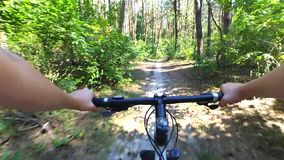 Girl rides a bike along a path in a pine forest in the summer with sunlight stock footage