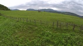 Girl rides a horse along old fences stock footage
