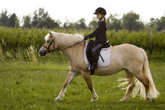 Girl rides to Horse. Teenager rides to Haflinger Horse stock photo