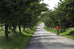 Girl riding bicycle on road through trees Stock Photo