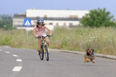 Girl riding bike with pet dog stock photos