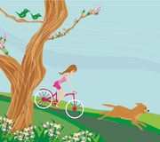 Girl is riding bike. Vector Illustration Stock Photography