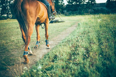Girl riding a brown horse on green meadow, place for text Stock Photos