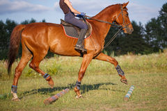 Girl riding a brown horse on green meadow Stock Photography
