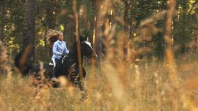 Girl riding on a brown horse through the woods stock video footage