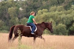 Girl riding horse. Teen girl riding Morgan horse in field stock images