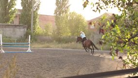 Professional girl rider galloping on a horse. stock video footage