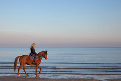 Girl riding a horse. On the beach Stock Photography