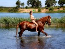 A girl riding a horse on the lake. Equestrian Sports Club brought horses to bathe in the lake. Russia. Moscow region. Schelkovsky district Royalty Free Stock Photos