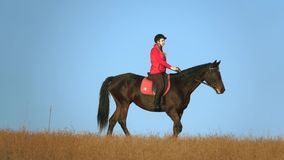 Girl riding a horse strokes a horse standing in the field. Slow motion. Side view. Girl riding a horse strokes a horse standing in a field of blue sky. Slow stock footage