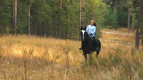 Girl riding a horse walking in the woods stock video