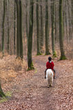 Girl riding a pony. Young girl riding a pony/horse in the forest in Denmark Stock Images