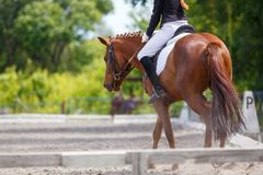 Girl riding sorrel horse on dressage competition. Rear view with copy space. Equestrian sport background royalty free stock photos