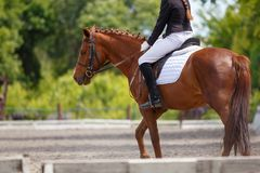 Girl riding sorrel horse on dressage competition. Rear view with copy space. Equestrian sport background royalty free stock photo