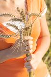 Girl with ripe ears of barley in hand Royalty Free Stock Images