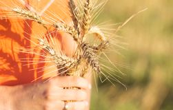 Girl with ripe ears of barley in hand Royalty Free Stock Photos