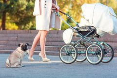 A girl rolls a wheelchair and a dog sits next to her. Outside. stock photography