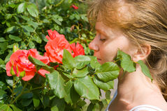 Girl and rose. The red girl enjoys a smell of a rose stock image