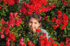 Girl and roses. Girl, hidden in the bushes of red roses. Summer in Paris Royalty Free Stock Photography