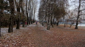 Girl running in autumn park during cold cloudy day. Woman exercising outdoors stock video