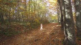The girl is running through the forest. FullHD stock video
